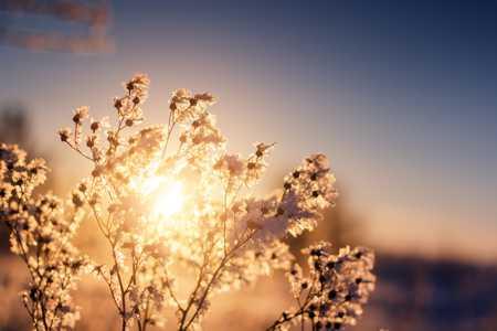 Whispered Sunset